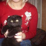 "Клубные  котята питомника   ""sweettoy"""