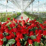 Рабочие в цветочную оранжерею