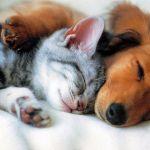 Ветеринария:Биокорректоры для здоровья всех животных